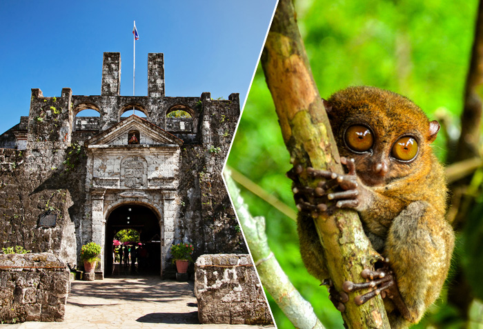 Affordable Bohol Tour Packages | Divaishnavi Travel